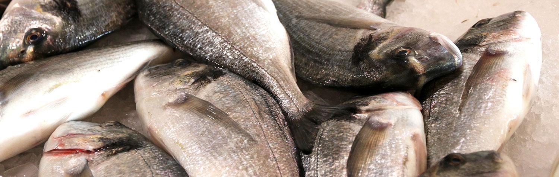 Tipp: frischen Fisch erkennen